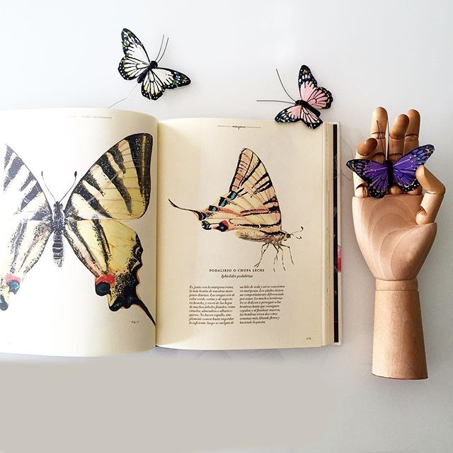 """La sección de mariposas del libro """"vida-bestiario ilustrado"""" me tiene echando humo el cerebro. Un poquito más de cerca en IG stories. #butterfly #mariposa #nature #naturelovers #illustration #ilustracion #watercolor #acuarela #book #libros #librosilustrados"""